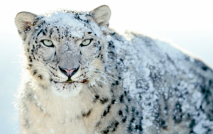Snow Leopard Security Updates